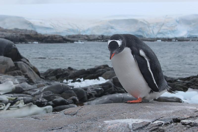 Antarctica 299.JPG