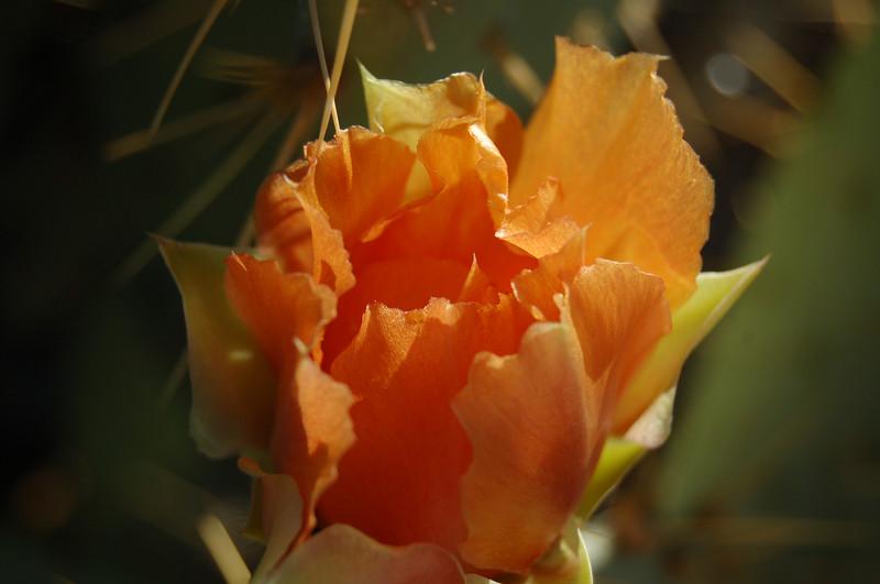 2008 05 02_0039.JPG