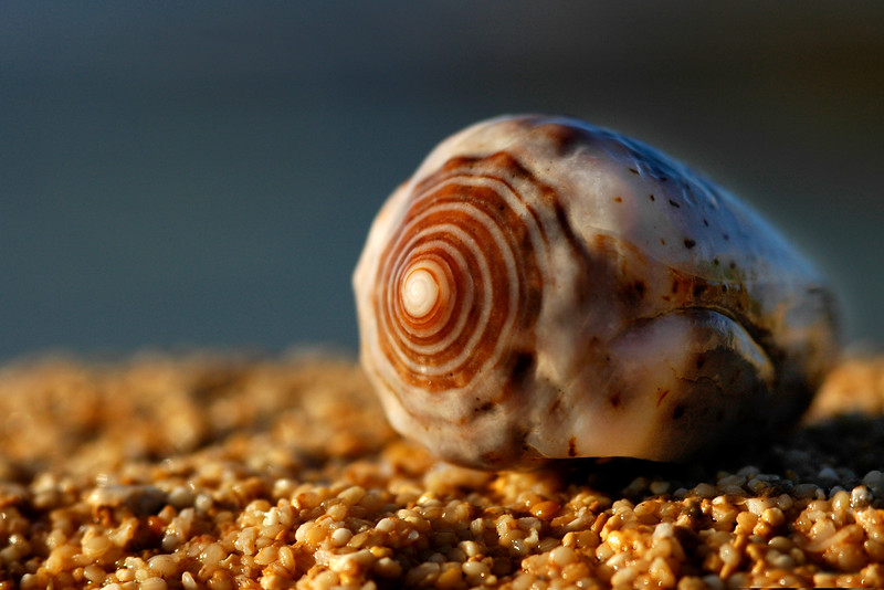 Seashell washed up onto the beach