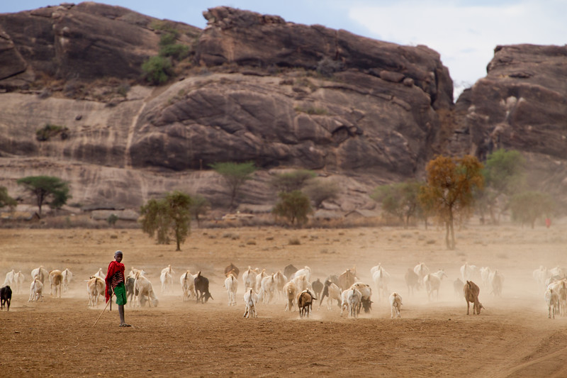 Maasai boy, about 9, tends to his goats.