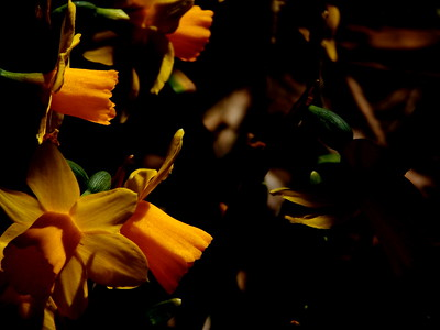 Photography - April 18