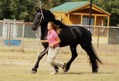 Friesian Sporthorse Inspection - October 13, 2015