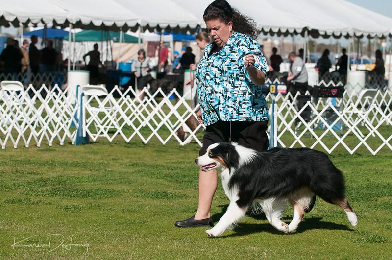 20170205_Australian Shepherds_Lost Dutchman Kennel Club-41.jpg