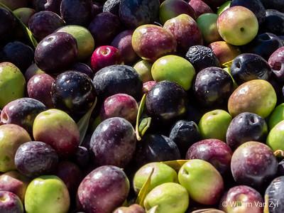 Olives (Olea europaea)