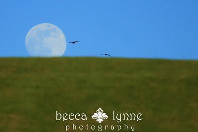 january 9. 2009 a cool moon arising