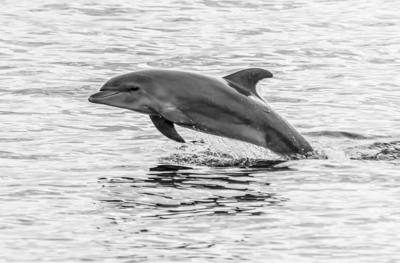 Maui_Dolphins-2.jpg