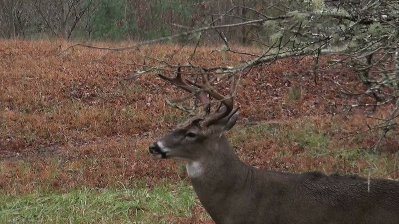 whitetail_2920_02_sony_audio.mov