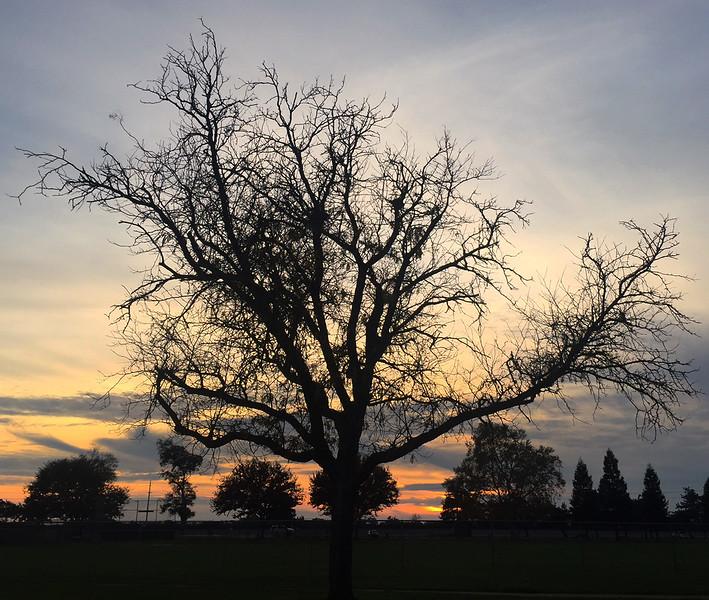 same tree.jpg