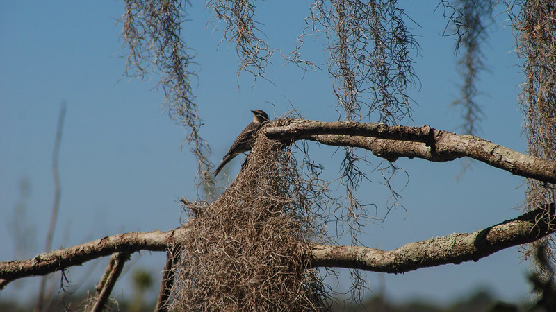 Songbird on a tree branch