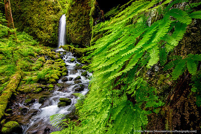 Columbia Gorge Spring 2014