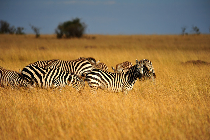 Africa 2010-172.JPG
