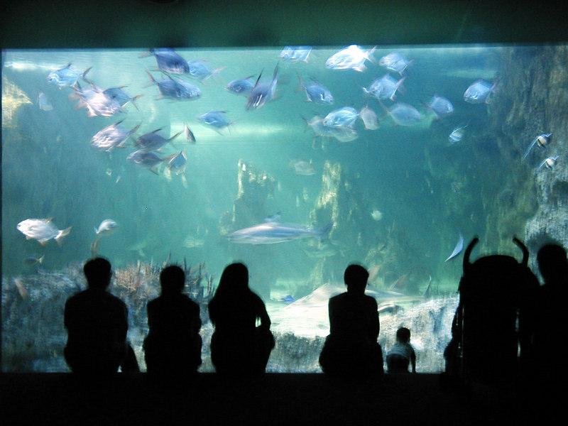 58.  Sydney Aquarium.JPG