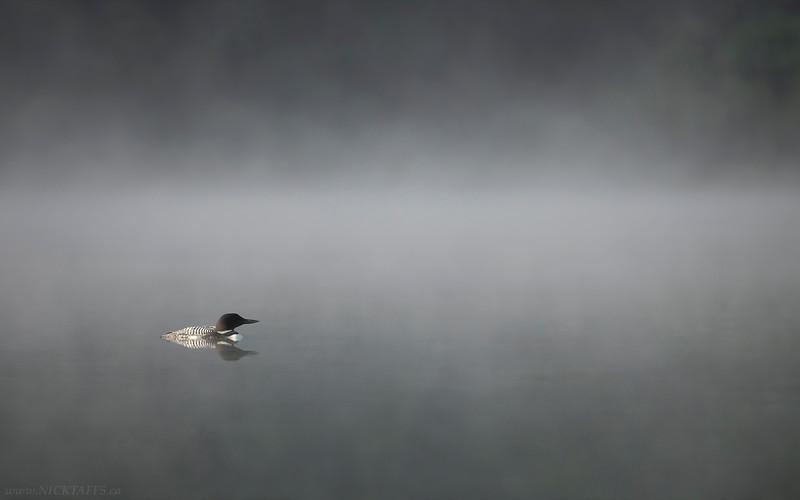 Through the Mist-Wallpaper.jpg