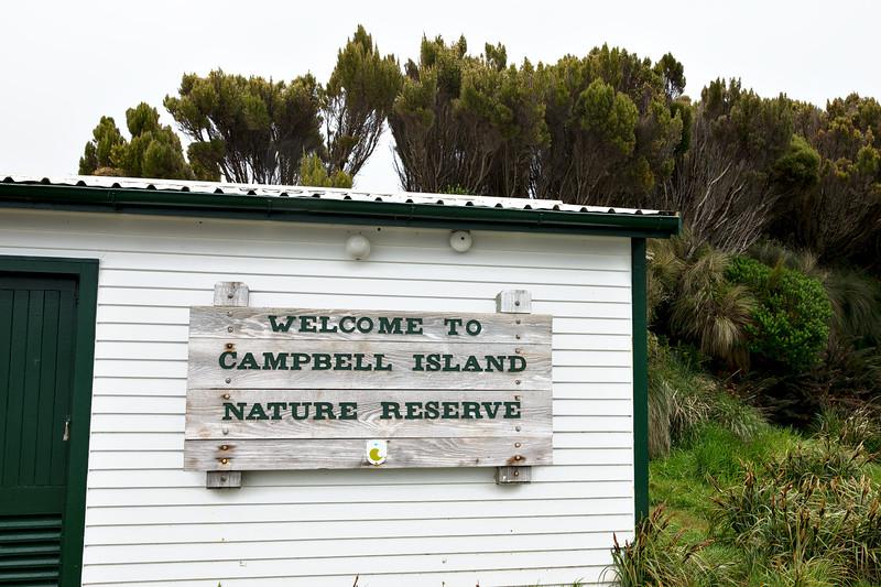 CampbellIsland7.jpg