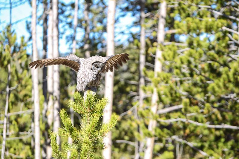 Fall Trip Wyoming & Montana 2016 (101 of 193).jpg
