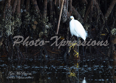Sanibel Island Florida 1-24-2013