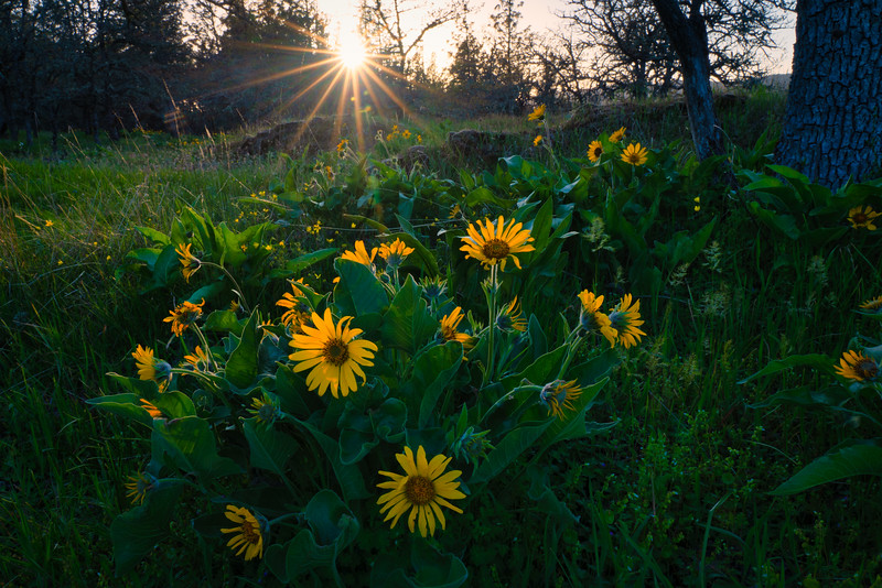 WIldflowers and Sun Star