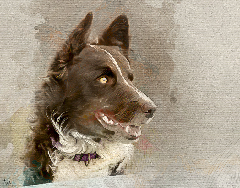 doggiewcweb.jpg