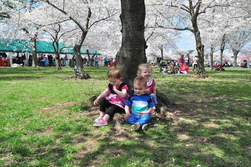 Cherry Blossoms 2014 095.jpg