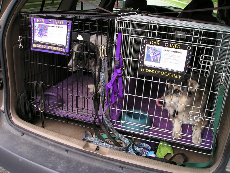 Boost and Tika are checking out the fact that Fin is already out of his car and ready to go.