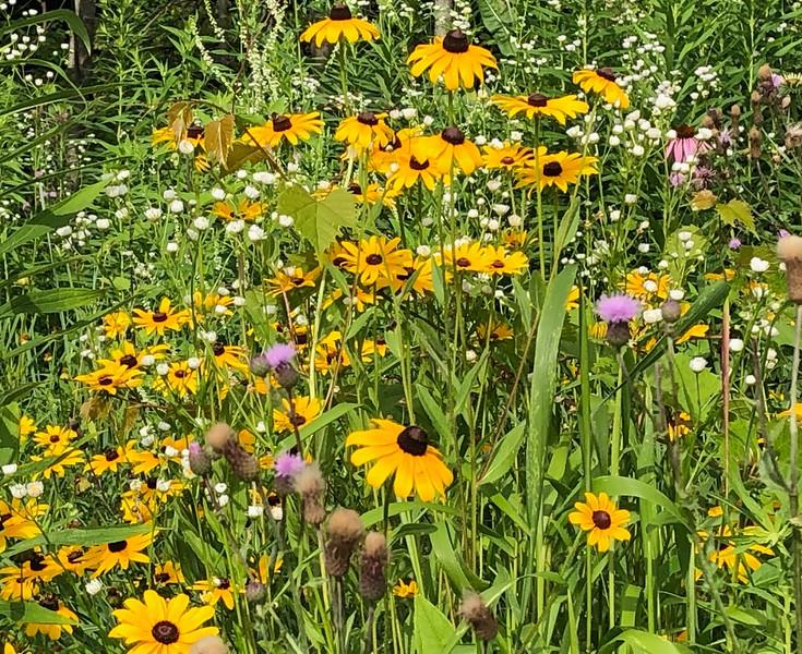 yellow, purple and white wildflowers
