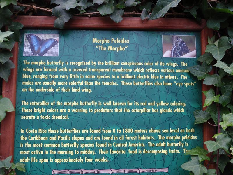 020_La Paz Waterfall Gardens. Butterflies.JPG