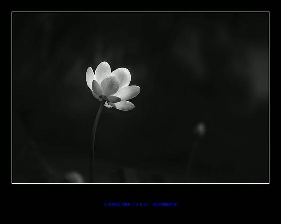 _MG_8531-ps-M.jpg