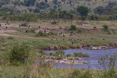 Day8, Mara River Crossing