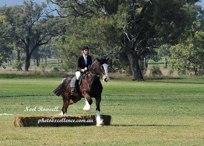 Heavy Horse Field Trials - St Helliers