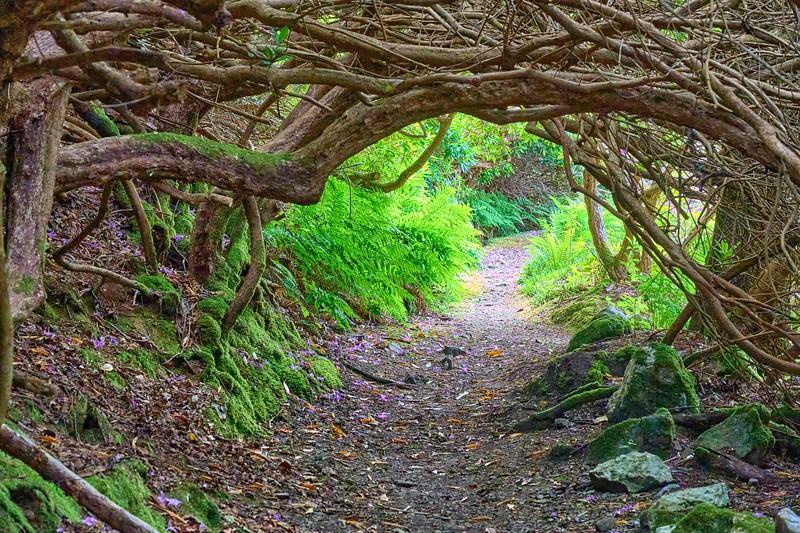 Near Ullapool - Leckmelm gardens - the path down to the loch