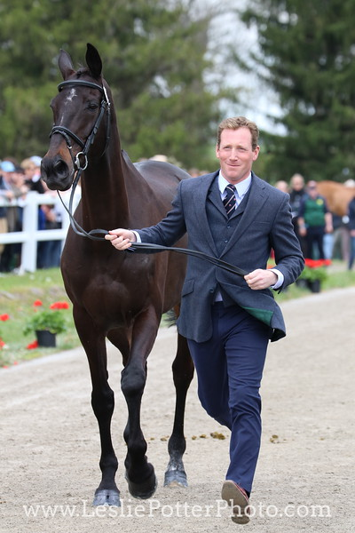 oliver-townend_mhs-king-joules_7608.JPG