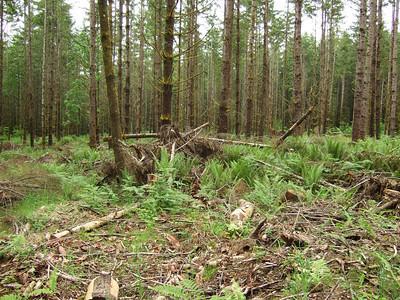 Dog Wood Forest