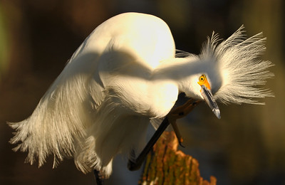 Florida Birds & Butterflies - Winter 2010