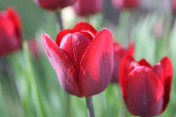 Iowa flowers