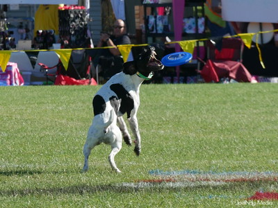 Events - INdy Disc Dog Classic - 6.2017