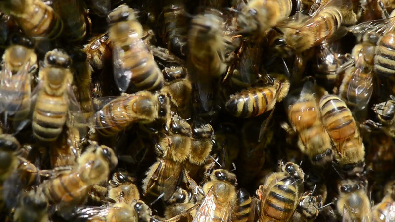 bees_02.mov