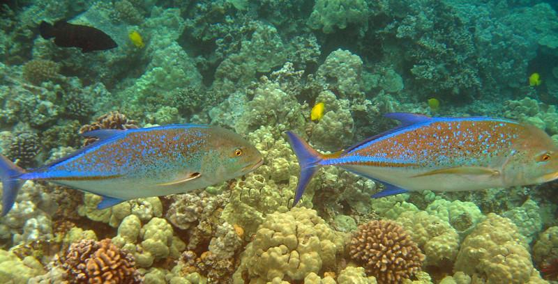 505- 20080416- Hawaii 20-Snorkelling IMG_0755.jpg