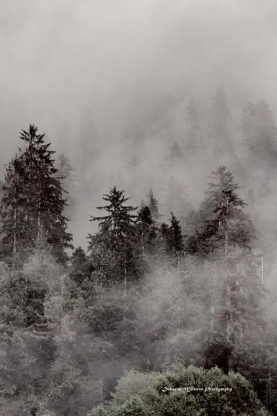 Great Bear Rainforest -  British Columbia, Canada