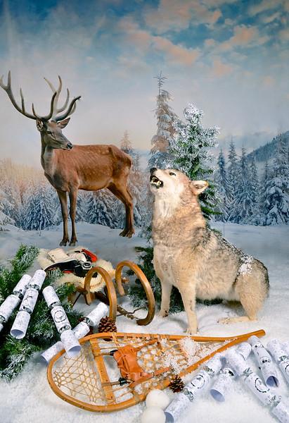 phototheatre-christmas deer-01.jpg