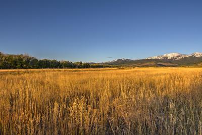 The Golden Grain, Driggs, Idaho