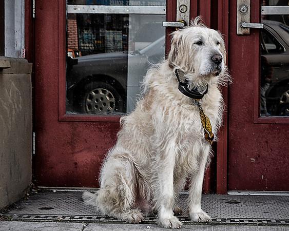 0310 pet  Good doggie.