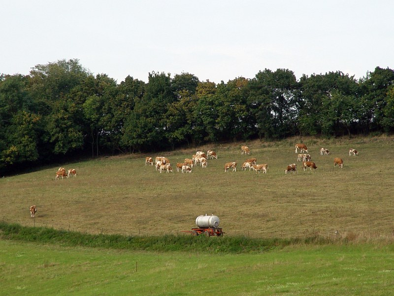 2005-09-10_06234 hoch gelegene Kuhweide in Dietendorf highly located cow meadow in Dietendorf