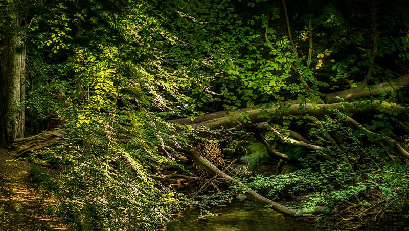 Forest Shadows-144.jpg