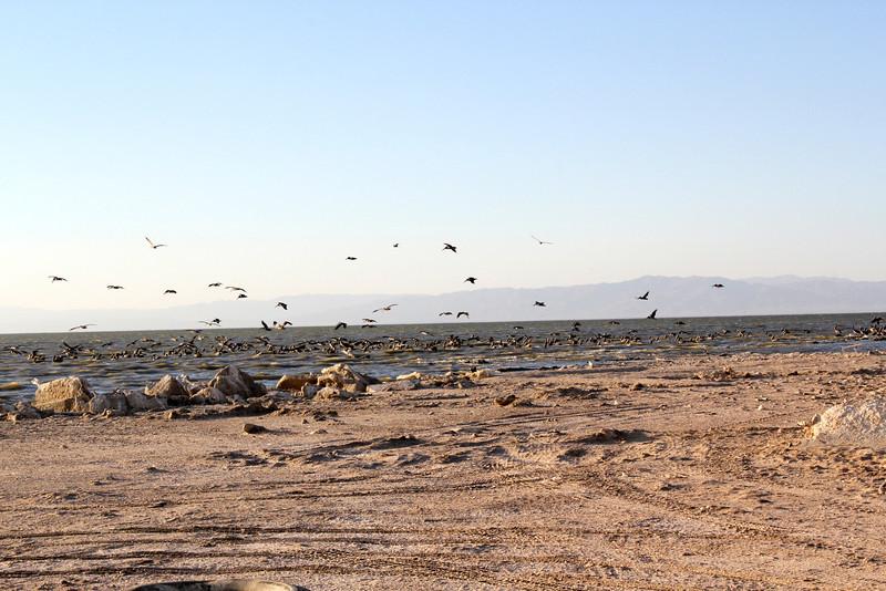 04 The Salton sea (4).JPG