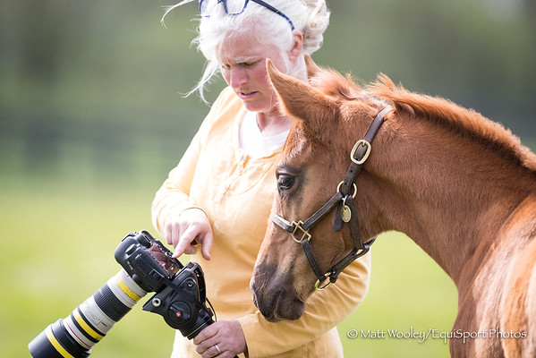 Sale Horse Video & Photo Service