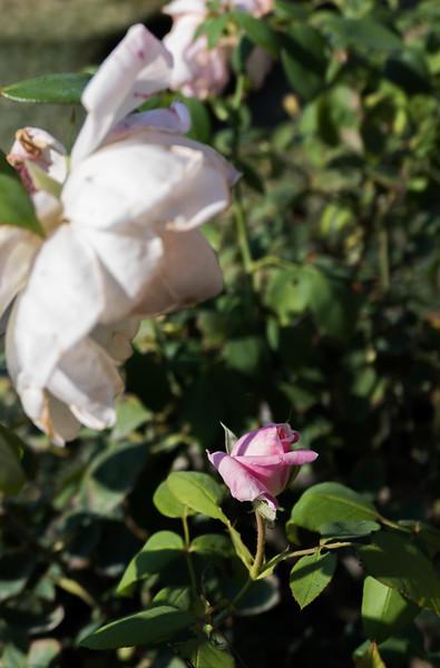 Day 19 Boboli Gardens (41 of 49).jpg