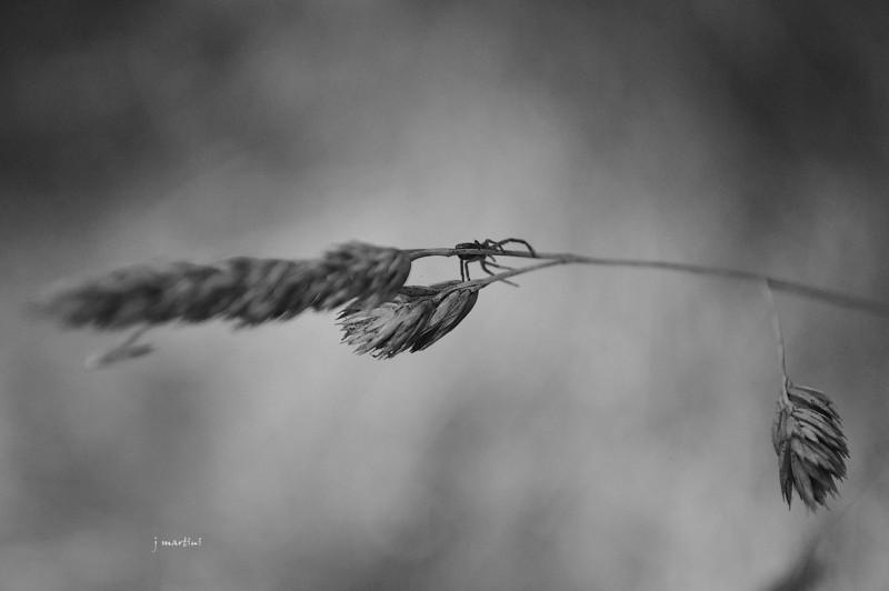 spider walk 11-16-2011.jpg
