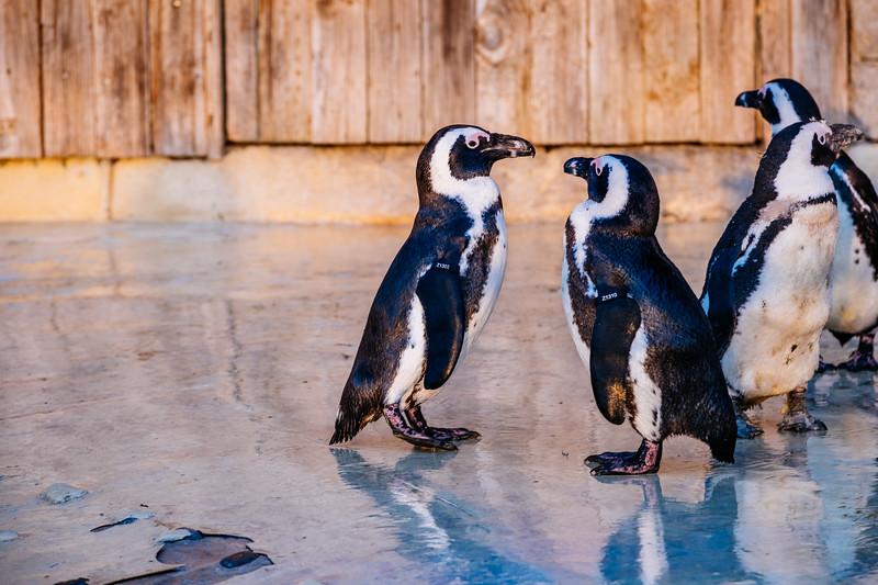 Tonis Zoo-0477.jpg