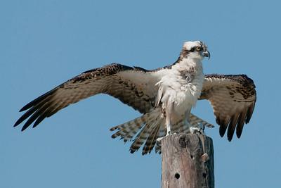 Photo & Birding Tour Of Amelia Island, Florida.