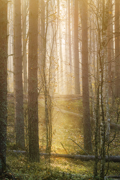 Early morning in the autumn forest